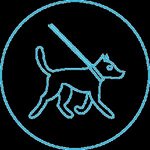 pet-walking-service-image